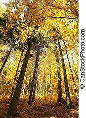 Autumn forest at sunrise