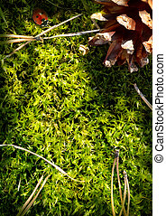 Autumn forest background. Moss