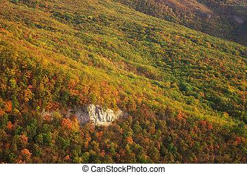 Autumn forest background.