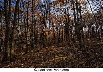Autumn forest. Beautiful nature