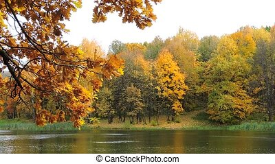 Autumn forest, branch sways in the wind over the lake, the falling yellow leaves 1