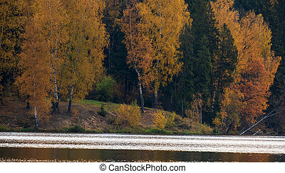 autumn forest by the lake