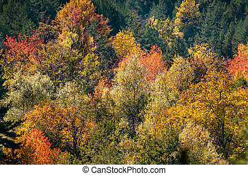 Autumn forest colorful trees background