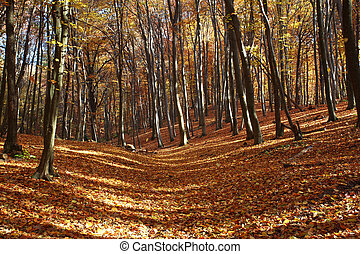 Autumn forest covered with fallen yellow leaves in the sun