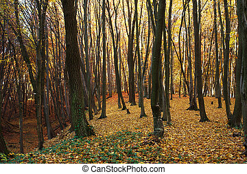 Autumn forest covered with fallen yellow leaves