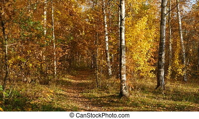 autumn forest falling yellow leaves panorama