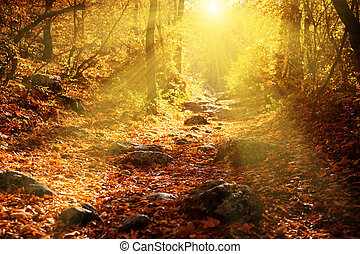 Autumn forest filled rays of the sun
