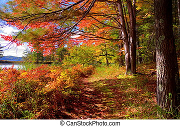 Hiking trail through a beautiful autumn forest. Ludington State Park. Ludington, Michigan.