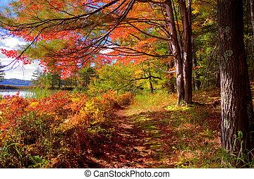 Hiking trail through a beautiful autumn forest. Ludington State Park. Ludington, Michigan.