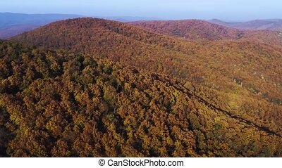 Autumn forest hills aerial drone footage - Autumn forest ...