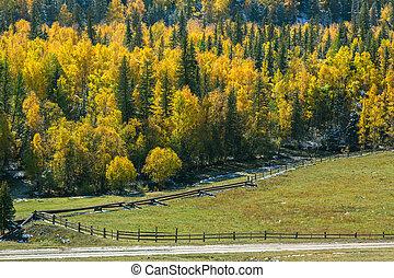 Autumn forest in Altai Mountains, Siberia, Russia.
