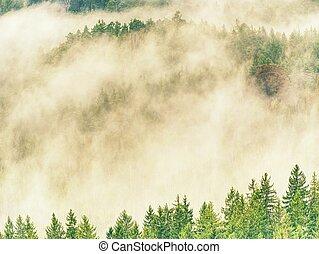 Autumn forest in fog. Fall mist. Enchanted foggy forest in fog