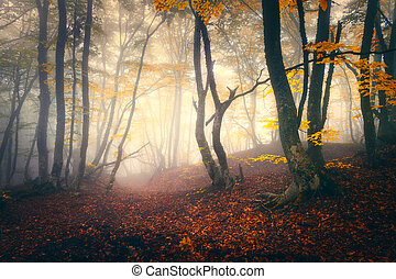 Enchanted autumn forest in fog in the evening