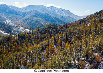 Autumn forest in foothills of North Chuya ridge, Altai Republic, Russia.