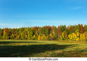 Autumn forest in front of a meadow