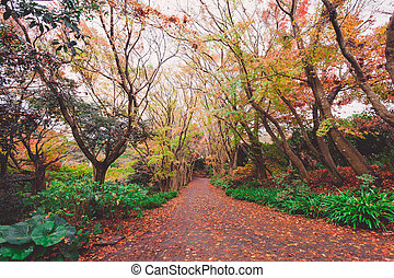 Autumn forest in Japan