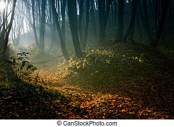 Autumn forest in morning