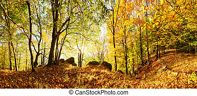 Autumn forest in mountain at sunset with sun