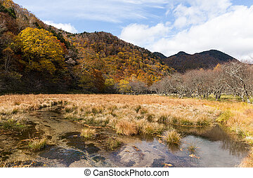 Autumn forest in Nikko