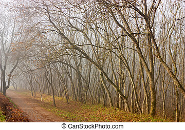 Fog on the country road, Northern Caucasus.