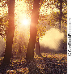Autumn forest in sunset light. Beautiful nature background