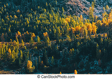 Autumn forest in the Altai mountains, Siberia, Russia.