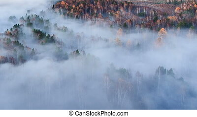 Autumn forest in the fog. Time Lapse