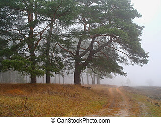 Autumn forest in the morning mist