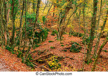 Autumn, forest in the mountains, fallen leaves on the railway and large boulders - a picturesque autumn landscape