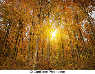 Autumn forest in the rays of the setting sun.