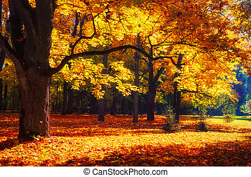 Autumn forest landscape in sunlight. Fall scene