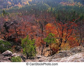 autumn forest, Landscape