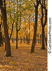 Autumn forest. Landscape. The ground is covered with yellow fallen leaves.