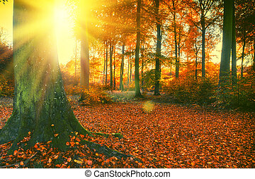 Autumn forest landscape with big tree and soil covered by fallen leaves at sunset