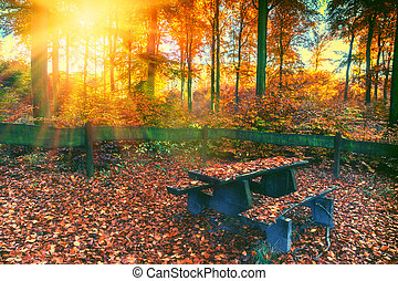 Autumn forest landscape with lonely picnic place at fall sunset