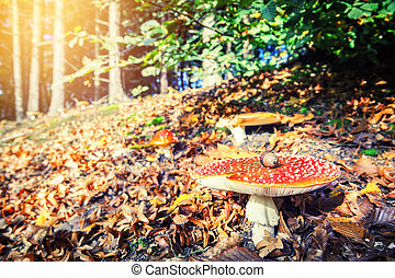 Autumn forest landscape with red cap mushroom