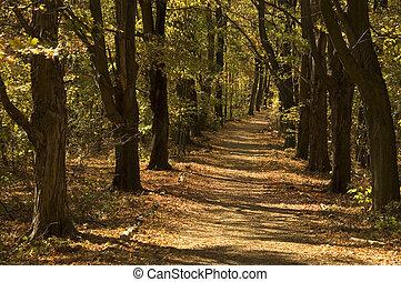 autumn forest lane