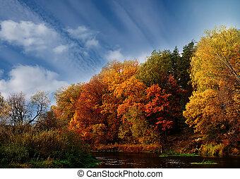 Autumn forest of birch, Linden, aspen, oak, maple