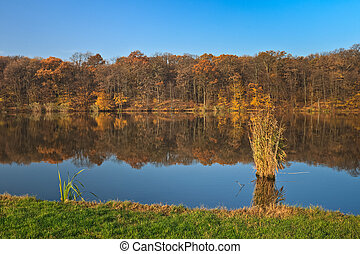 Autumn forest on a lake