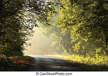 Autumn forest on a misty sunny morning