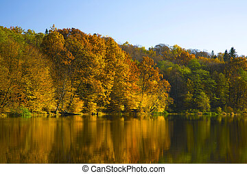 Autumn forest  on a pond