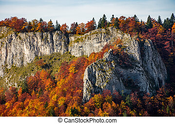 autumn forest on a rocky cliff