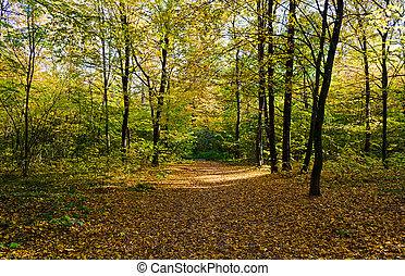 Autumn forest on a sunny day. Autumn in the park
