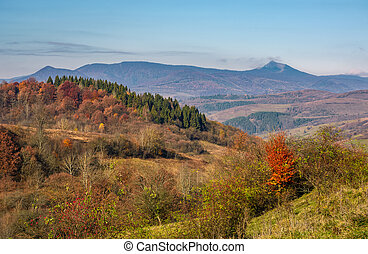 autumn forest on hill in high mountains. beautiful nature...