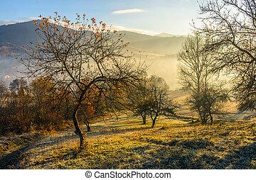 autumn forest on hillside in fog - asphalt road going...
