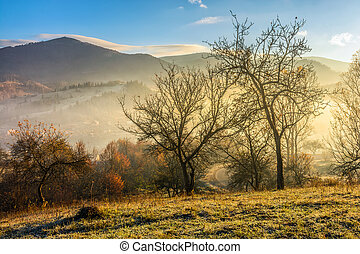 autumn forest on hillside in fog - hillside with naked trees...