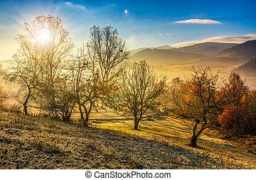 autumn forest on hillside in fog - road under hillside with...