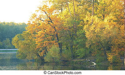 Autumn forest on the lake.