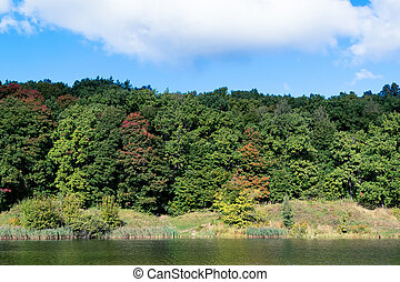 Autumn forest on the shore of a lake or river. In the background a blue sky with white clouds.