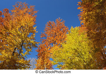 Autumn forest on the sky background